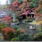 平野神社(京都) 北野を越えて